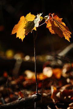 Goldener Herbst VI von Meleah Fotografie