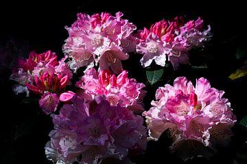 Flowerpower von Noa Duizend