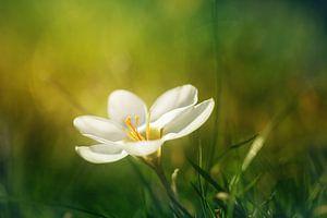 Gehuld in het groen von LHJB Photography