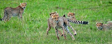 cheeta's van Peter Michel