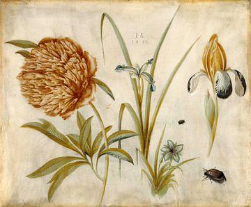 Blumen und Käfer, Hans Hoffmann