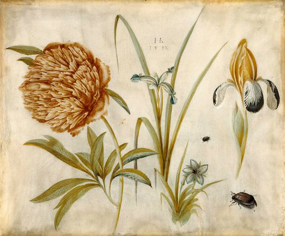 Bloemen en Kevers, Hans Hoffmann