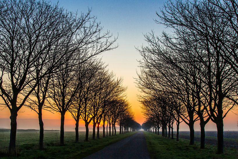 de kleurijke weg richting de zon van Frans Bruijn