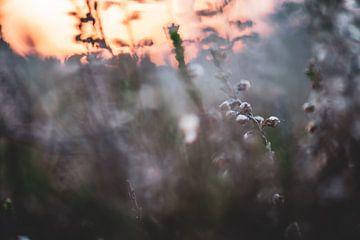Blumen Teil 40 von Tania Perneel
