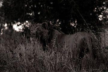 Leeuw in de bosjes van Christel Nouwens- Lambers