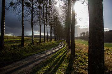 Bospad in de Ardennen van