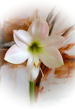 white amaryllis van M.A. Ziehr