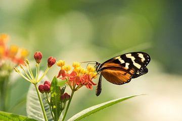 Vlinder von Barend de Ronde