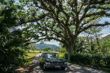 Oldtimer vs prachtige boom (Cuba) van Joris Pannemans - Loris Photography