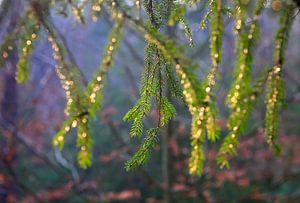 Abendlicht im Wald von Thomas Jäger