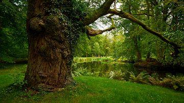 Oude boom in het park van kasteel Ludwigslust van Jenco van Zalk