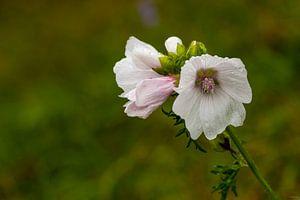 berm bloempje