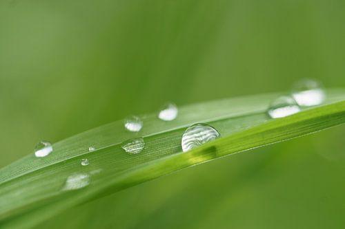 Druppels op een grasspriet