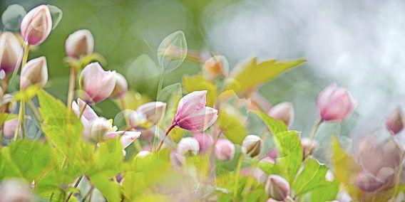 als dit geen lente is van  Hanneke Luit