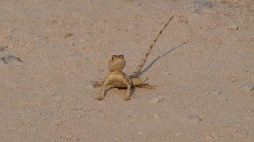 Reptiel Etosha national parc Namibie van Erna Haarsma-Hoogterp