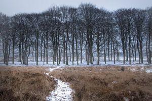 Sneeuw in de bossen op de Veluwe