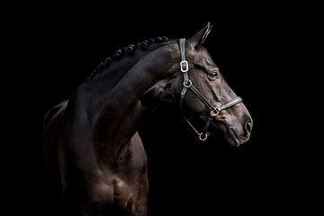 Schwarzes Pferd vor schwarzem Hintergrund von Lotte van Alderen