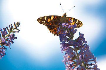vlinder von Karin Keesmaat Kijk-Kunst