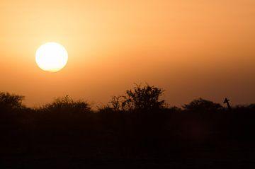 De Giraffe en de zonsondergang  van Jeroen Kleverwal