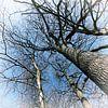 Hoge Bomen van Yvonne Blokland thumbnail