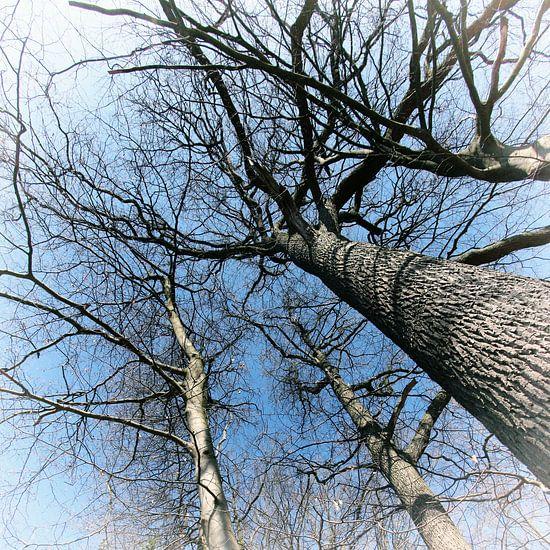 Hoge Bomen van Yvonne Blokland