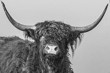 Highlander-Kopf von natascha verbij