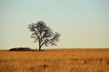 Verlaten boom op de afrikaanse savanne, natuurgebied Rietvlei in Pretoria van Vera Boels