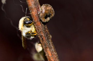 Fleißige Biene von Dominique van Ojik