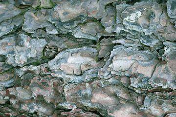 Structure van Lynlabiephotography