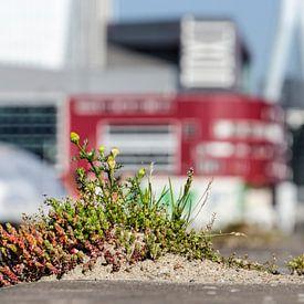 Nature urbaine sur un quai de Rotterdam sur Frans Blok