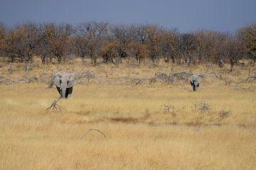 Der afrikanische Elefant von Merijn Loch