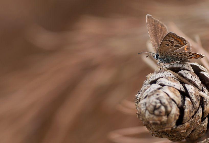 Heideblauwtje in dynamische omgeving van Bas Mandos