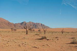 Groen in de woestijn van