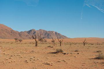 Groen in de woestijn von Miranda Zwijgers