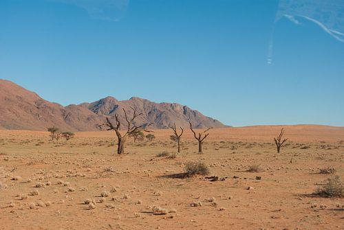 Groen in de woestijn
