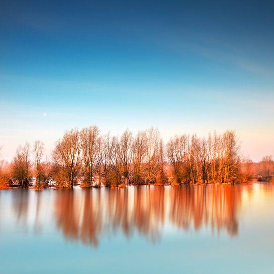 Ondergelopen Bomen van Ruud Peters