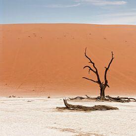 Een dode boom in de Namib woestijn, Namibië, Sossusvlei locatie. Deadvlei is een witte kleipan geleg van Tjeerd Kruse