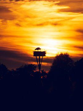 Storch bei Sonnenuntergang von Jasper van der Vos