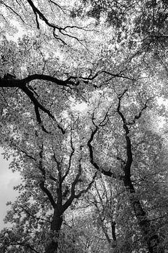 hohe Bäume fangen viel Wind ein.........denn von Dick Kattestaart