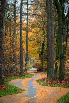 der Radweg durch den Wald von Marcel Hof