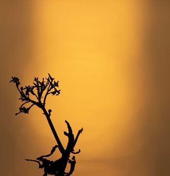 Stille Stimulanz (zwei) von Lynlabiephotography