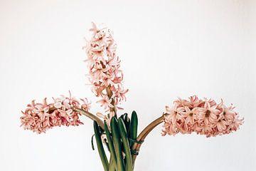 drie roze hyacinten van Michael Schulz-Dostal
