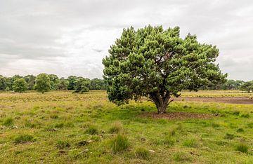Grove den op Strijbeekse Heide van Ruud Morijn