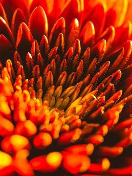 Gerbera Pomponi / Bloem / Bloemblaadjes / Natuur /  Lens flare / Licht / Rood / Oranje / Geel / Wit  van Art By Dominic