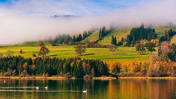 Herbst und Schwäne am Grüntensee von Henk Meijer Photography