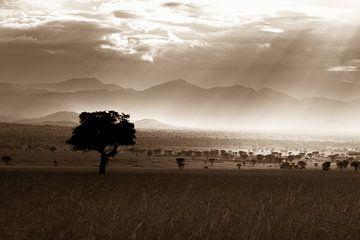 Afrikaanse Savanne van Hans de Bruyne
