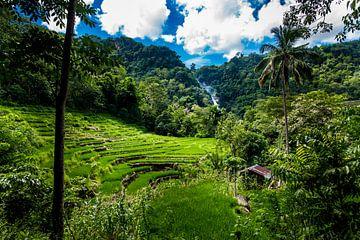 Rijstvelden met waterval, ricefields with waterfall