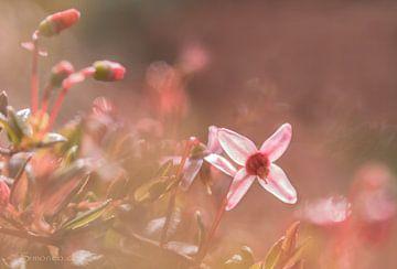 Pretty in pink: veenbes, flowerpower