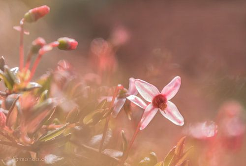 Pretty in pink: veenbes, flowerpower van