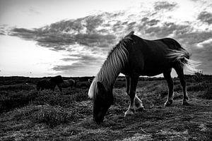 Wilde paarden, zwart wit van Nynke Altenburg
